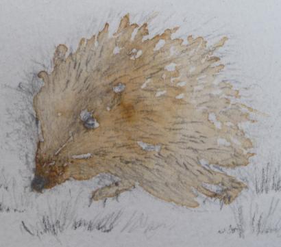 hedgehog-vicki matthews